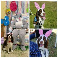 Easter bunny 2017 pics