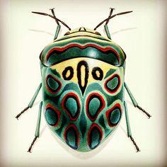 Gazoz olma böcek ol!