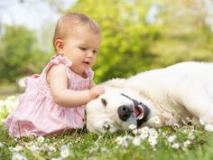 Säuglinge und Hunde: Tipps zum richtigen Umgang – Foto: Shutterstock / Monkey Business Images    www.einfachtierisch.de
