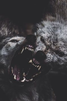 """There are two wolves within us all. One good, one evil. Who wins? The one you feed the most."" - Cherokee Proverb"