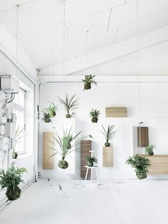 You wish to ascertain how much you want to spend on plants. These plants might still be enjoyed with supervision. Indoor plants make interior design and decor not merely green and lovely, but creat… Air Plants, Indoor Plants, Green Plants, Indoor Gardening, Potted Plants, Cactus Plants, String Garden, Plant Projects, Decoration Plante
