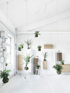 hanging garden //