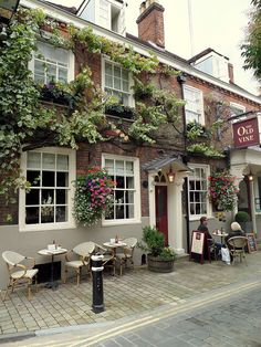 the old vine | winchester, england