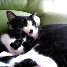 お昼寝。Noah&Lana