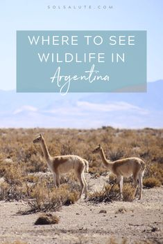 The 6 Best Places to See Wildlife in Argentina — Sol Salute South America Destinations, Argentina Destinations, South America Travel, Travel Destinations, Visit Argentina, Argentina Travel, Argentina Animals, Tango, Travel Guides