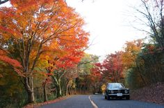 Giulia and autumn leaves 5