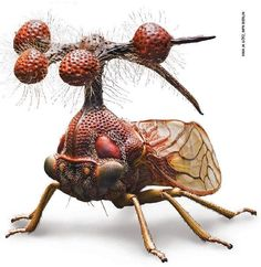 O inseto mais bizarro do mundo é brasileiro [Fotos]
