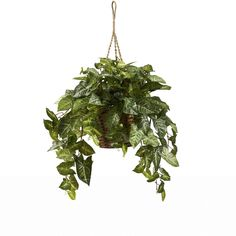 Nephthytis Hanging Basket   Overstock™ Shopping - Great Deals on Nearly Natural Silk Plants