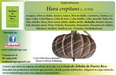 Redescubre el Molinillo...con la Guía de Árboles de Puerto Rico www.verdenativopr.com