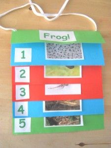 Make A Step Book Today! - Craft Activities for Kids Sequencing Activities, Craft Activities For Kids, Science Activities, 1st Grade Crafts, Life Cycle Craft, Lifecycle Of A Frog, Frog Life, Chicken Life, Teacher Lesson Plans