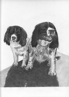 "Pencil drawing - ""Bramble & Jasmine"""