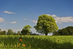 Elogio de la primavera / Praise of Spring