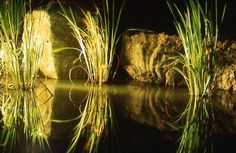 Water reflcetion effect. Plant Lighting, Outdoor Lighting, Led Lighting Solutions, Yard, Gallery, Water, Tips, Plants, Gripe Water