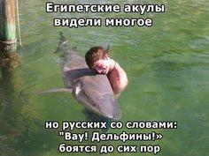 Египетские акулы...