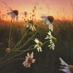 rural-landscapes-iphone-photos-6