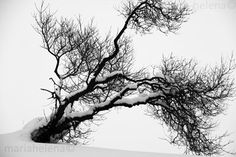 winter tree finland  black and white by MariaHelenaPhoto on Etsy, $95.00