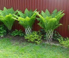 55 Favourite Small Yard Landscaping & Flower Garden Design - New ideas Small Yard Landscaping, Backyard Ideas For Small Yards, Landscaping Plants, Landscaping Ideas, Small Patio, Patio Ideas, Potted Plants Patio, Shade Garden Plants, Magic Garden