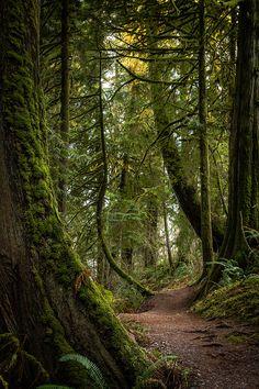 La tranquilidad del bosque