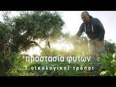Προστασία φυτών με 3 οικολογικούς τρόπους (για έντομα, τετράνυχο, σαλιγκάρια και ασθένειες) - YouTube Garden Works, Mens Sunglasses, Youtube, Tips, Plants, Gardening, Agriculture, Outdoors, Style