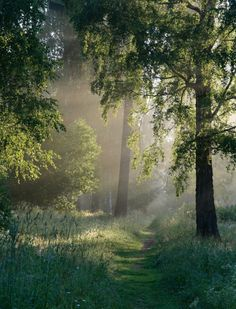 Where fairies walk in early morning when dew is rising.