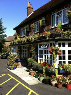 The Golden Lion Winchester. Numerous dairy free, gluten free low FODMAP options and great allergy awareness