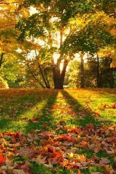 Autumn gorgeous