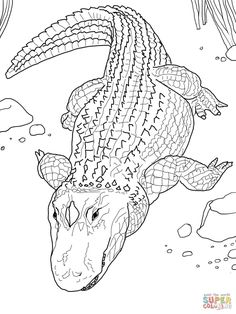 american alligator or common alligator coloring page from alligators category select from 27115 printable crafts of cartoons nature animals - Alligator Clip Art Coloring Pages