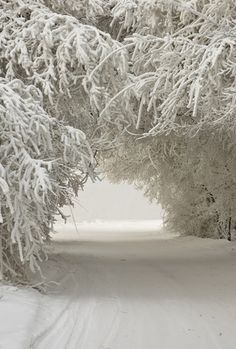 Winter road thru snowy trees