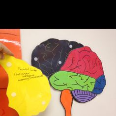A Velcro brain teaches children of all ages how important the brain is! I always start the year with the brain unit by Lane Clark!  Love it....