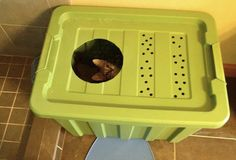 homemade cat litter box---so freakin easy, why didn't i think of this!