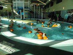 1000 Images About Rec Centre On Pinterest Pools Centre And University Of Cincinnati