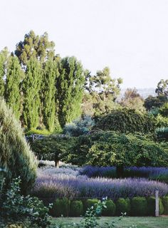 1000+ images about All Lavender gardens on Pinterest ...