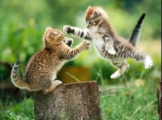 Incluso peleandose son adorables...