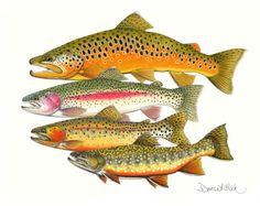 A Fly Fisher's Magnificent Four Trout Fishing, Fly Fishing, Fish Wood Carving, Scientific Drawing, Fish Artwork, Underwater Fish, Salmon Flies, Fish Drawings, Boat Painting