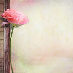 Backgrounds Fernanda Tomaz: Floral Com Amor Framed Wallpaper, Flower Background Wallpaper, Text Background, Flower Backgrounds, Flower Wallpaper, Wallpaper Backgrounds, 2 Clipart, Flower Clipart, Motif Floral