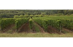 Marquis de Calon Marquis, Bordeaux, Vineyard, Outdoor, Stone Driveway, Wine Vineyards, Environment, Outdoors, Marquess