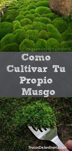 Wie man sein eigenes Moos züchtet - Cosas que adoro - Jardinería Horticulture, Plants, Organic Gardening, Garden Plants, Lawn And Garden, Diy Garden, Container Gardening, Urban Garden, Gardening Tips