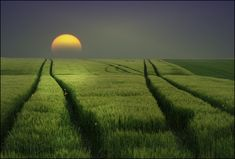 Tracks or .........: happiness does not exist, only the longing after ....  by Veronika Pinke   From Veronika Pinke