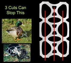 Cut up those plastic 6-pack holders! Help save the critters!!