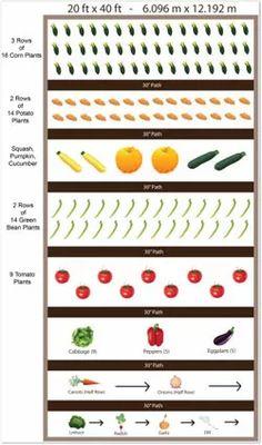 20 x 40 Sample Vegetable Garden Plan