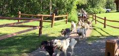 Sledding With Iditarod Dogs: The Tourist Version