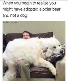 Tagged with funny, cute, dogs, memes, aww; Shared by dog memes that will make your day Funny Animal Jokes, Funny Dog Memes, Cute Funny Animals, Funny Animal Pictures, Animal Memes, Cute Baby Animals, Funny Cute, Funny Dogs, Meme Pictures