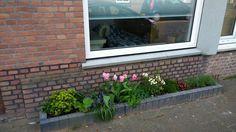 the beginning of an urban frontage garden, spring
