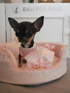 just for my laughing pleasure! okay ... this Chihuahua made me think of `E.T phone home.´