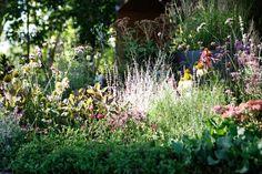"""The New Wave"" by Ian Barker Gardens, Melbourne International Flower Garden Show 2013 Garden Design Images, Landscape Design, Hampton Garden, The New Wave, Garden Show, Bed And Breakfast, Garden Inspiration, The Hamptons, Melbourne"