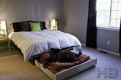 Trundle dog bed