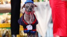 World's Ugliest Dogs: So ugly, they're cute! | HLNtv.com