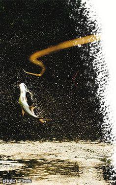 Matériel #peche à la #mouche : et pourquoi pas une idée de cadeau pour Noël ?