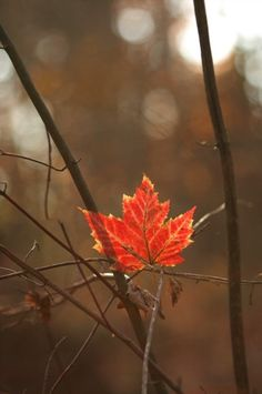 The last lovely leaf of Autumn!
