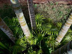 Foto by: @oculilupus A beleza natural de nossos lares! #Foto #Photograph #Arte #Art #ArteComLuz #Nikon #CoolpixL810 #Luz #Veder #Árvore #Green #Tree #Céu #BlueSky #Life #Natureza #Natural #HomeSweetHome #Casa